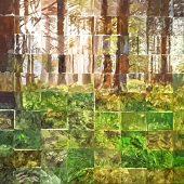 Waldlichtung - ein Corona-Kästchen-Bild